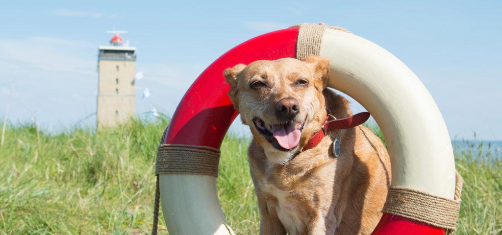 Mit dem Hund auf Terschelling - WestCord Hotels