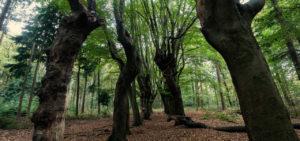 Bos nabij Zwolle - Westcord Hotels