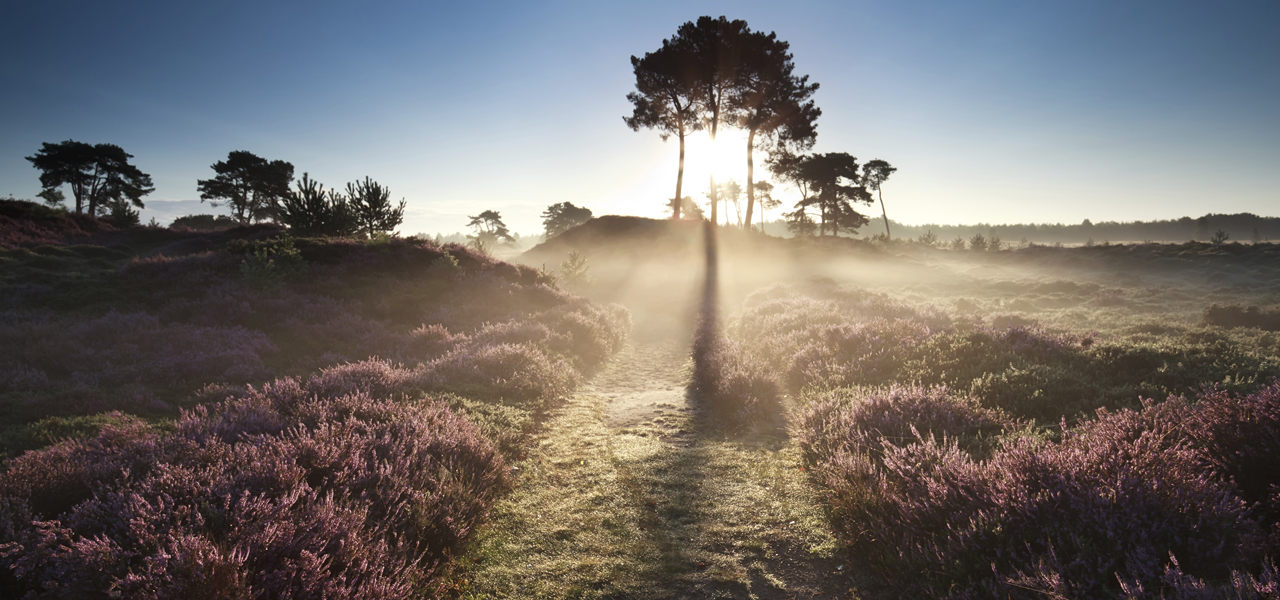 arrangement-wellness-veluwe